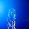 Thumbnail image for Box Jellyfish: The All-Seeing Creature With 24 Eyes
