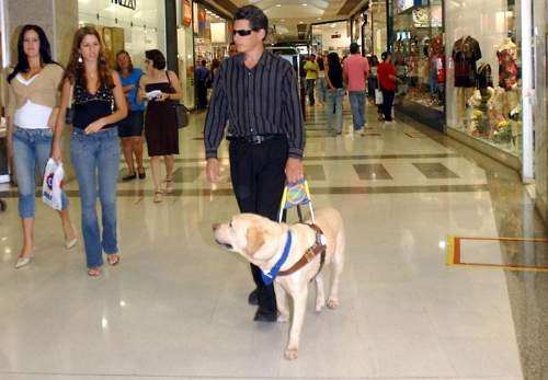 Guide Dog Guides A Blind Man Photo By Antonio Cruz