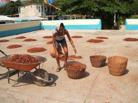 Woman Drying Cacao Photo By Electrolito Creative Commons ShareAlike Licence