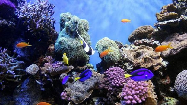 Coral Reef Photo By Fascinating Universe Creative Commons ShareAlike Licence
