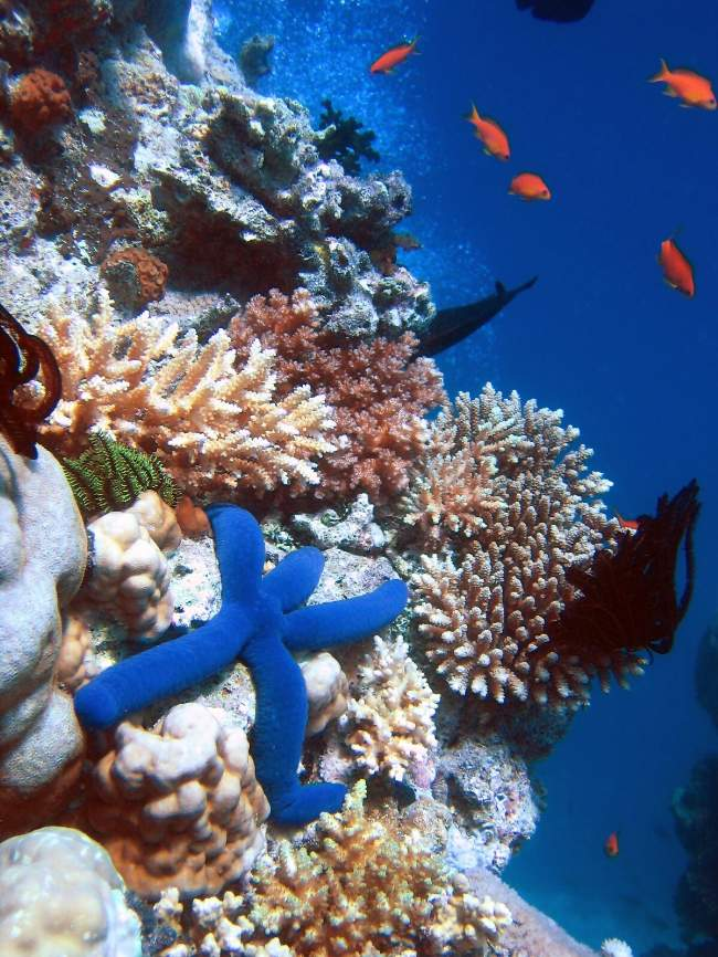 Coral Reef Photo By Richard Ling Creative Commons ShareAlike Licence