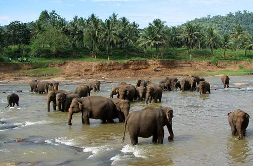 Optimized-Elephant Orphanage in Sri Lanka Photo By Bernard Gagnon