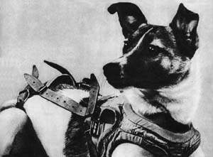 Laika: The First Living Being In Space