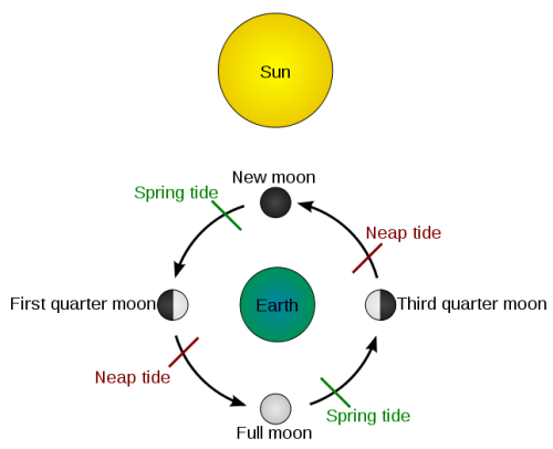 Spring And Neap Tides And The Lunar Cycle