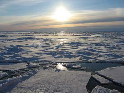 The Arctic In Summer