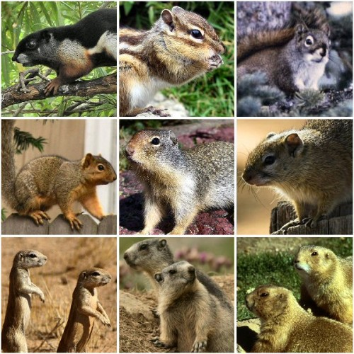 The Many Squirrel Species