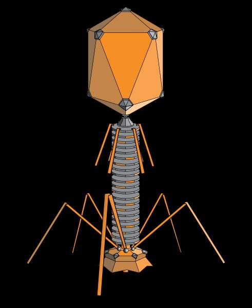 Superbugs Bacteriophage Virus