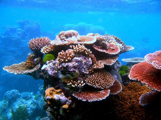 Coral Reef In The Great Barrier Reef Australia Photo By Toby Hudson Creative Commons ShareAlike Licence