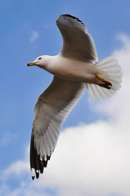 Jonathan Livingston Seagull Quotes Photo By Jiyang Chen Creative Commons ShareAlike Licence